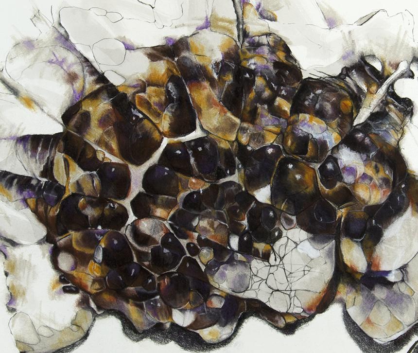 jelly blubber (gannet beach) detail