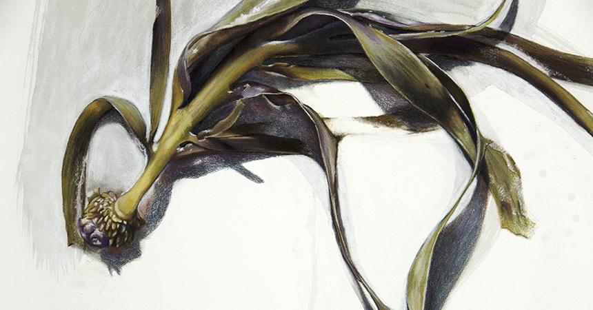 seaweed (gannet beach) i detail a
