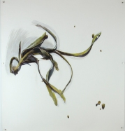 'seaweed (gannet beach) i' 2014 | pastel pencil and ink | 108 x 100 cm | SOLD