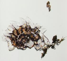 'jelly blubber (gannet beach)' detail, 2014