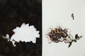 'jelly blubber (gannet beach)' 2014 | charcoal, charcoal pencil, pastel pencil and ink | diptych 108 x 160 cm