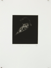 'discarded object (mutton bird)' 2010 | mezzotint print | edition of 20 | 20 x 18 cm (plate size)