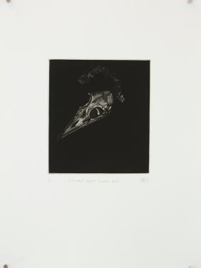 'discarded object (mutton bird)' 2010 | mezzotint print | edition of 20 | 20 x 18 cm (plate size)