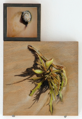 'signs of trouble (phyllospora and shells)' 2015 | pastel pencil, powdered graphite and ink on two wood panels | 30 x 20 cm | SOLD