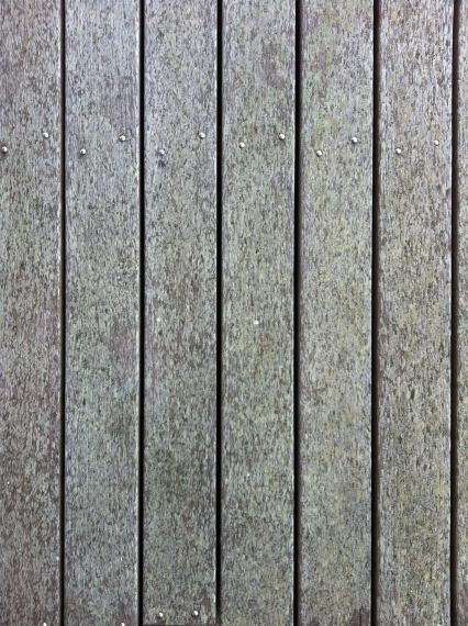 lichen and deck
